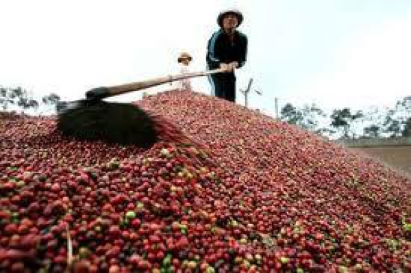Coffee bean prices at highest for two years