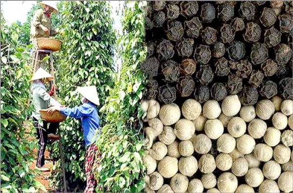 Pepper remains key export item in 2017